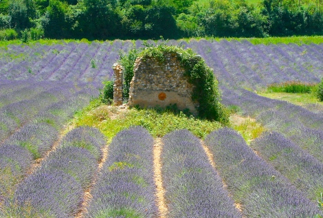 Provence-PSandsPhotos